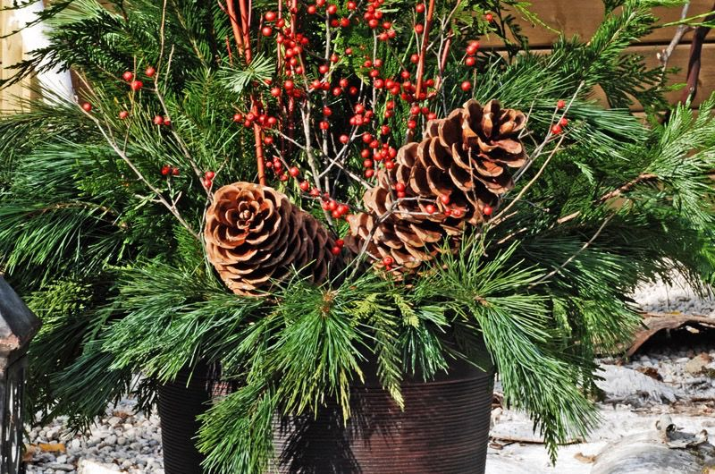 Everyday Christmas Greens Planter - Nov 27th