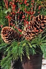Everyday Christmas Greens Planter - Nov. 28