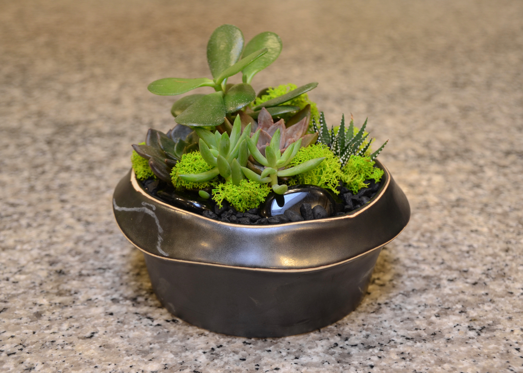 Everyday Succulent Bowl - Wed. March 27th
