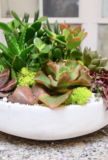 Everyday Succulent Bowl Tues. May 28th