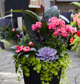 Everyday Patio Planter Workshops