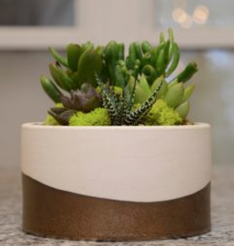 Everyday Succulent Bowl Wed. May 22