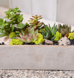 Everyday Succulent Bowl Tues. May 14