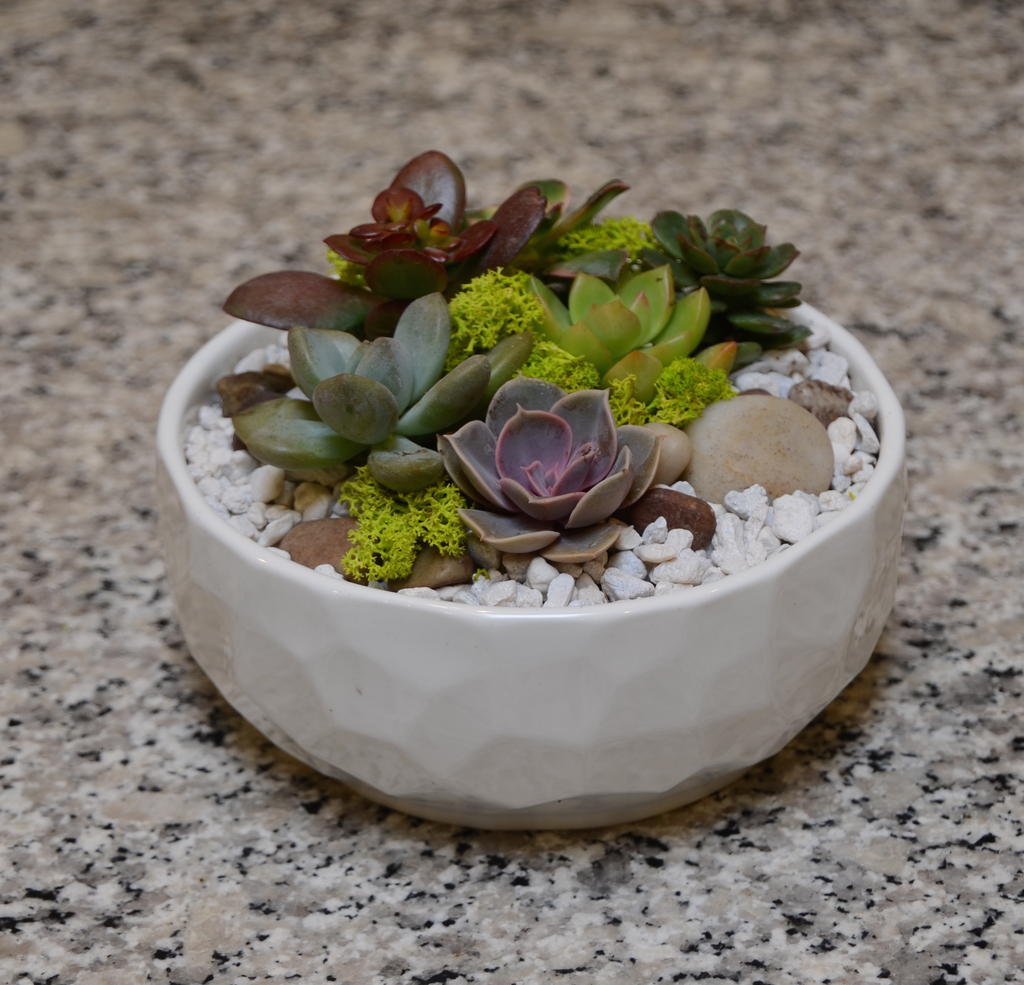 Everyday Succulent Bowl Mon. May 13