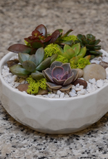 Everyday Succulent Bowl Wed. Sept 18