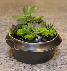 Everyday Succulent Bowl Tues. Sept 24th