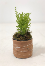 Christmas Small Cypress Arrangement
