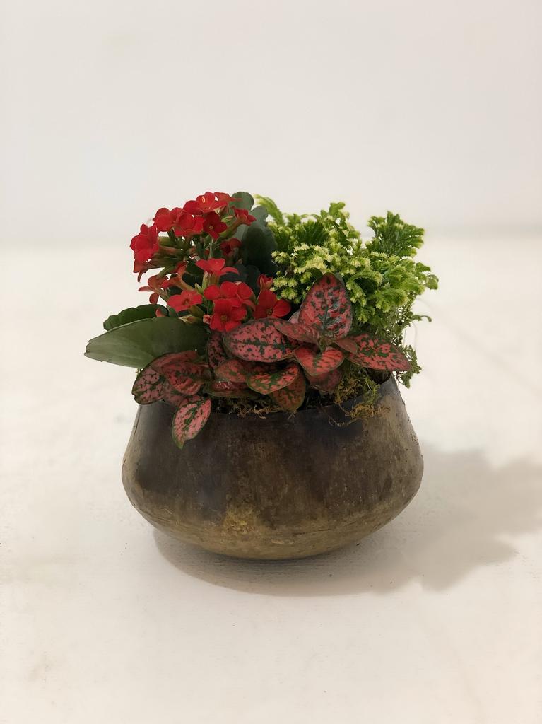 Christmas Small Tin Floral Arrangement
