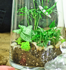 Everyday Terrarium Workshop - March 24th