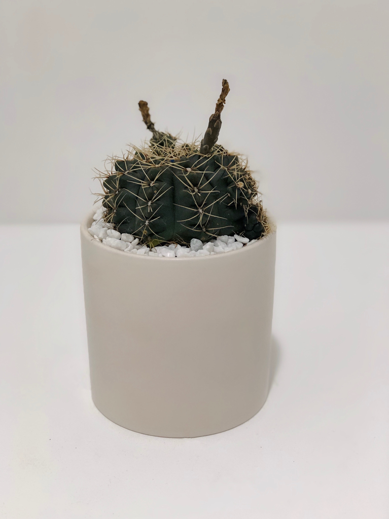Everyday Small Cactus