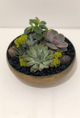 Everyday Large Succulent Arrangement