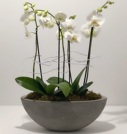 Everyday Large Orchid Arrangement