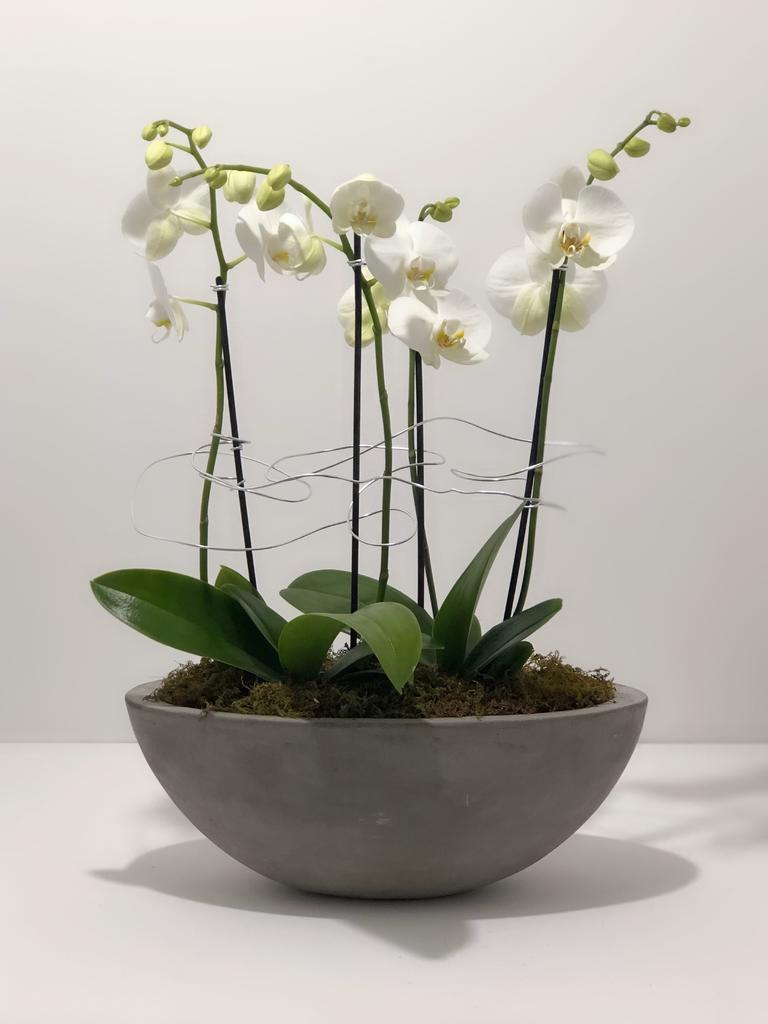 Everyday Large Orchid Arrangement