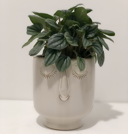 Everyday Medium Face Time Pot Arrangement