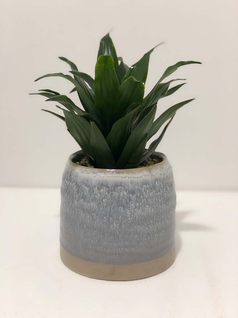 Everyday Blue & Grey Pot Arrangement