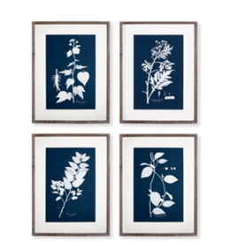 Everyday Cyano Botanical Leaf Study Prints