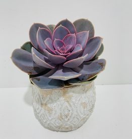 "Everyday 4"" Pink Succulent in Patterned Ceramic Pot"