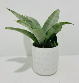 "Everyday 4"" Silver Sansevieria in White Patterned Pot"