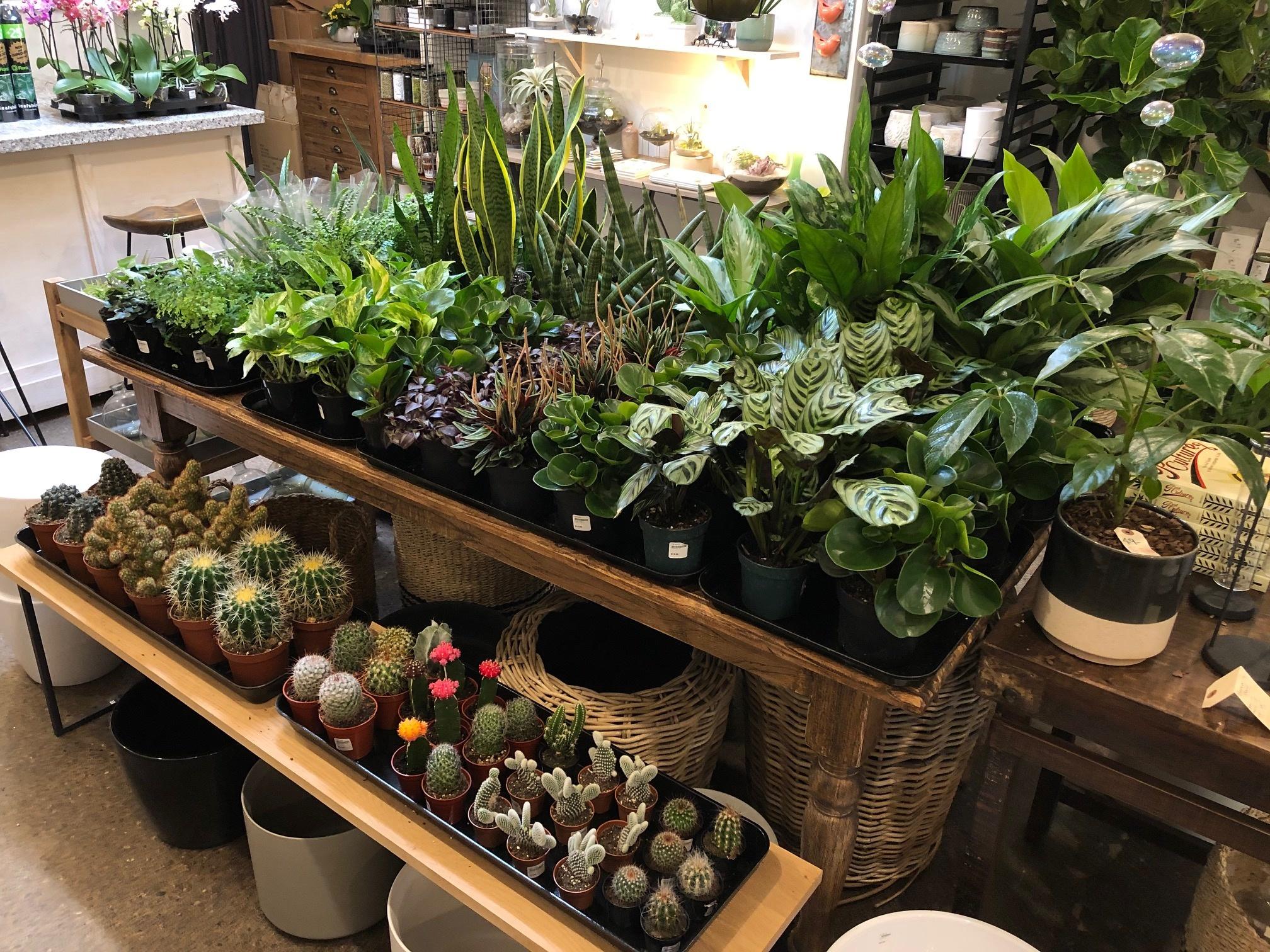 House Plant