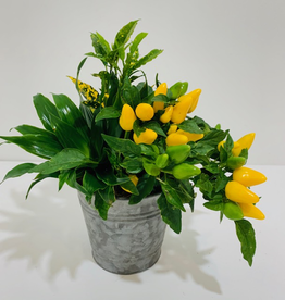 """Fall 4.5"""" Fall Arrangement in Tin Container"""