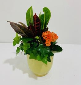 "Fall 4"" Fall Arrangement in Ceramic Pot"