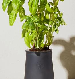 Modern Sprout Black Planter - Basil