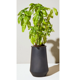 Modern Sprout Black Planter - Basil