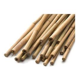 Natural Bamboo Cane 5' (25 / Pk)