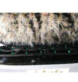 TurboKlone E144D Elite 144 Sites W / Humidity Dome