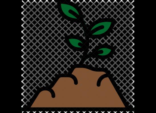 Soils & Mediums