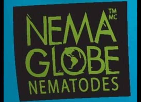 Nema Globe Nematodes