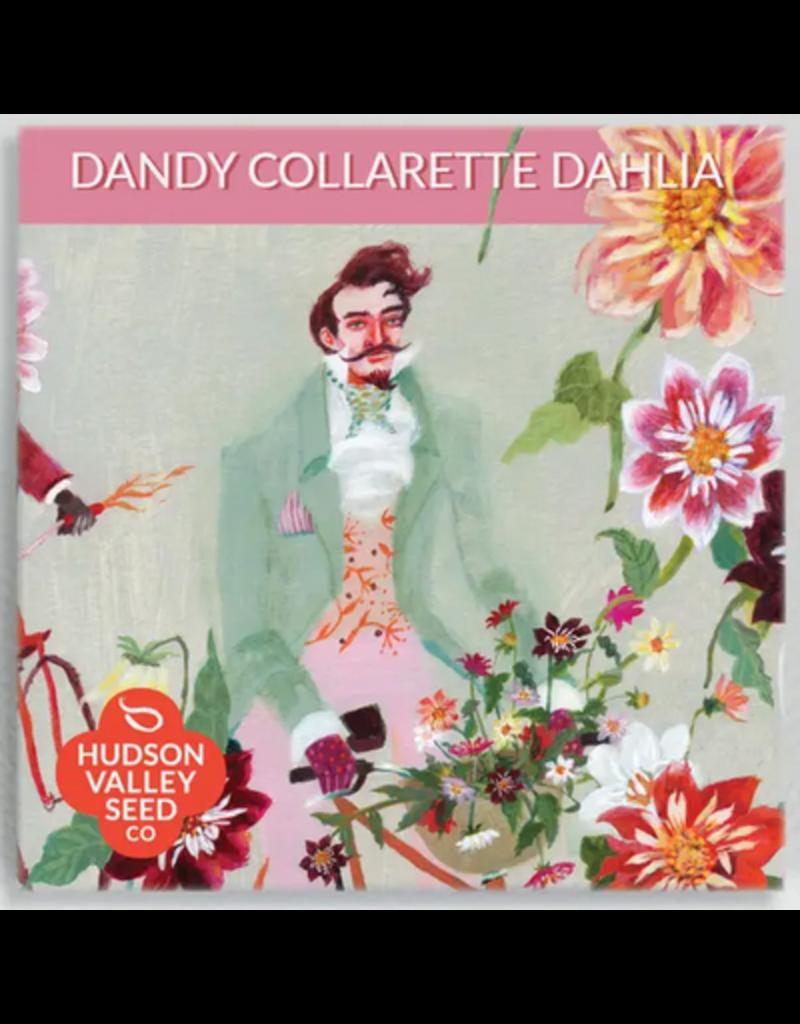Hudson Valley Seed Company Dandy Collarette Dahlia Mix