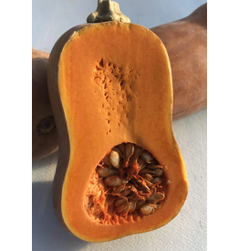 Hudson Valley Seed Company HoneyNut Squash Seeds
