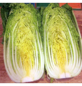 Hudson Valley Seed Company Nozaki Chinese Cabbage Seeds