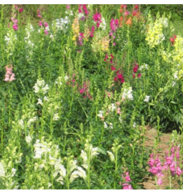 Hudson Valley Seed Company Snapdragon Mix Seeds