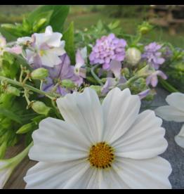 Hudson Valley Seed Company Midnight Garden Flower Mix Seeds