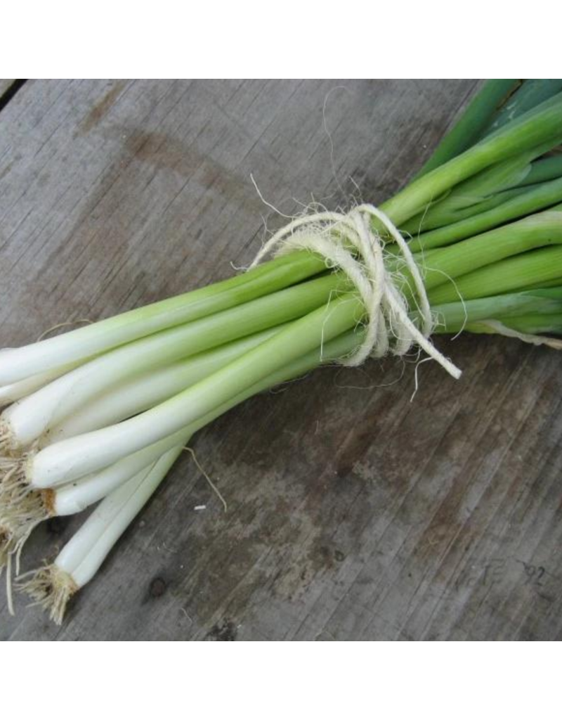 Hudson Valley Seed Company Evergreen Scallion Herb Seeds