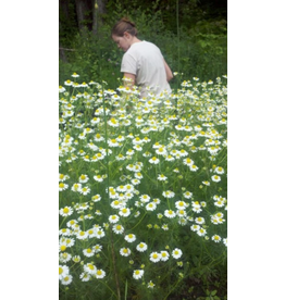 Hudson Valley Seed Company German Chamomile Herb Seeds