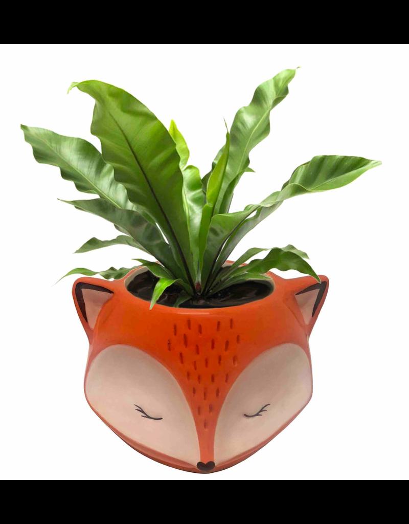 Red Fox Planter