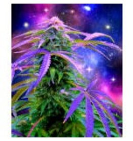 Cosmic Weed Plush Fleece Blanket