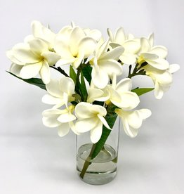 """Frangipani in 6"""" Cylinder-Faux Water (White)"""