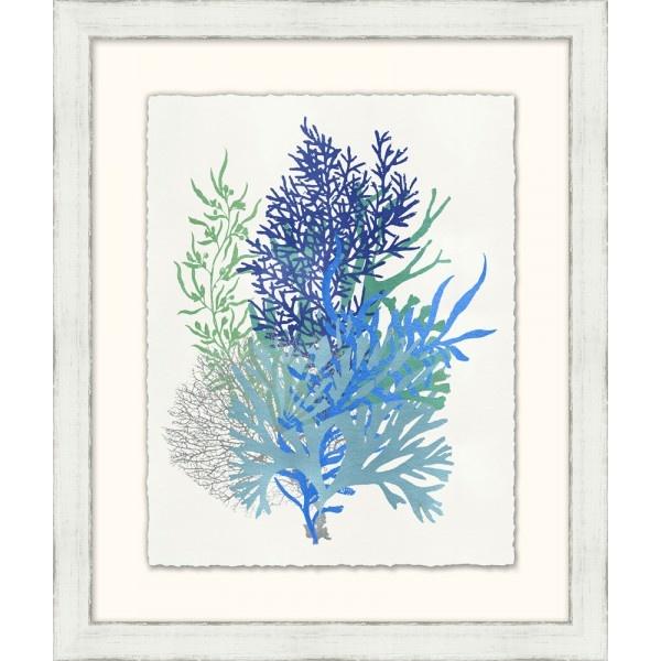 Graphic Sea Life 11