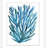Modern Coral 6