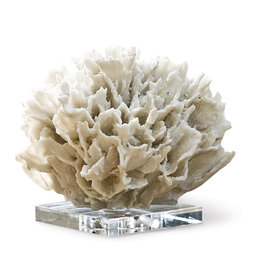 Ribbon Coral-White