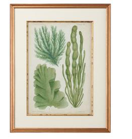 Seaweed Specimen In Green I