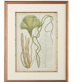 Seaweed Specimen In Green II