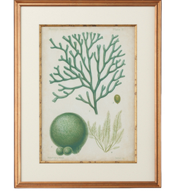 Seaweed Specimen In Green IV