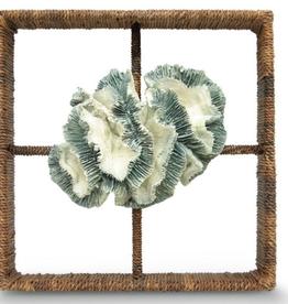 Broach Coral Shadow Box