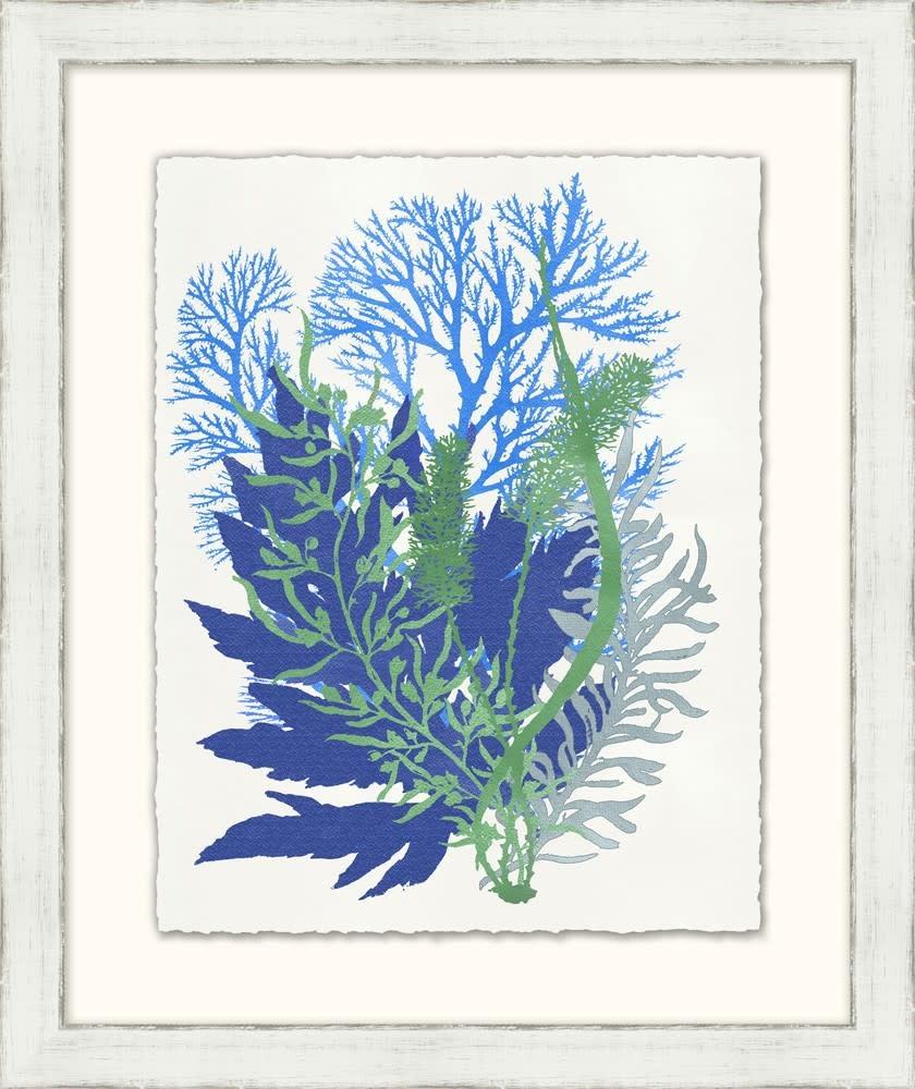 Graphic Sea Life (4)