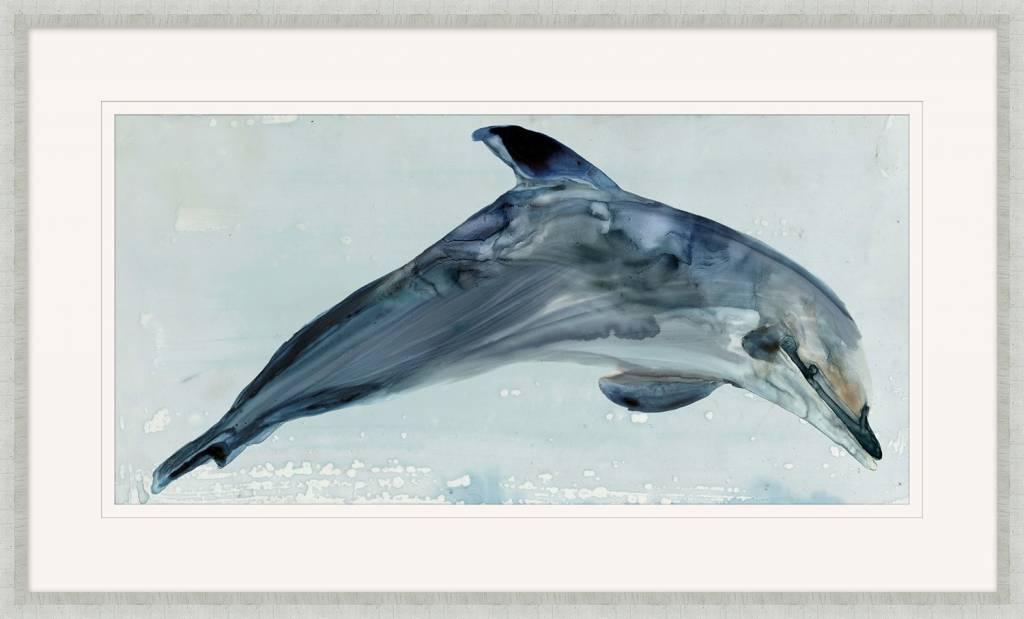 Playful Dolphin 1